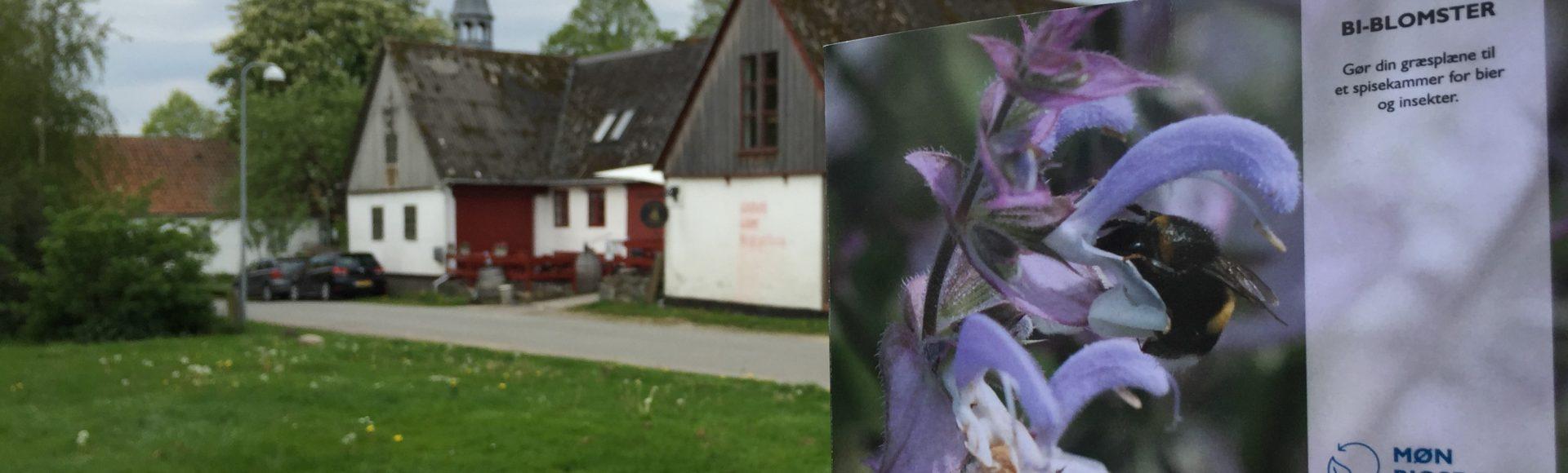 Gratis bi-blomster til Noorboernes haver!
